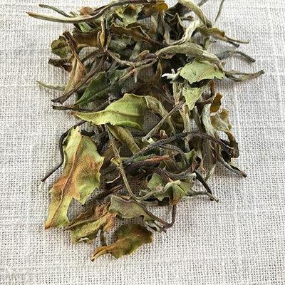 Stash Tea Mutan White Tea Loose Leaf Tea