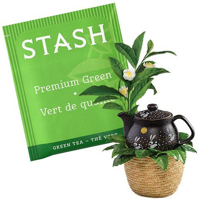 Stash Tea Premium Green Tea