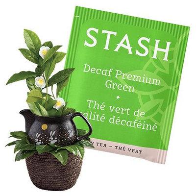 Stash Tea Premium Green Decaf Tea