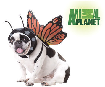 Spirit Animal Planet Butterfly Dog Pet Costume