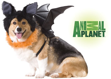 Spirit Animal Planet Bat Dog Pet Costume Large