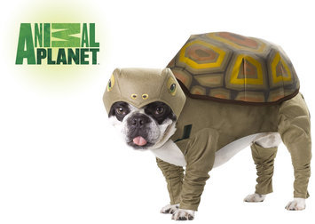 California Costume Collections Animal Planet Tortoise Pet Costume