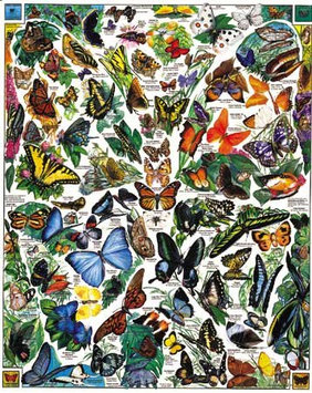 White Mountain Puzzles WHITE458 Puzzles Butterflies - 1000 pack