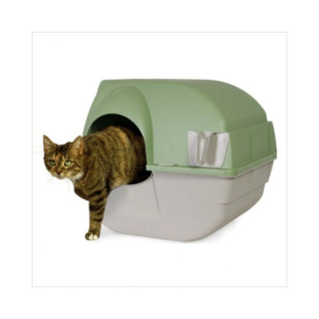 how to potty train a feral cat