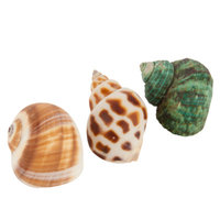 All Living ThingsA Decorative Hermit Crab Shell