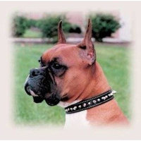 Mojetto Coastal Pet Products DCP170820BLK Leather Circle T Oak Tanned Embellished and Spiked Dog Collar, 20 by 1-Inch, Black