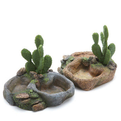 All Living ThingsA Cactus Reptile Dish