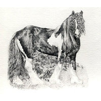 Olde Time Mercantile Gypsy Cob Horse Portrait Matted Art Print - 5 in x 7 in Design - 8 in x 10 in Matted