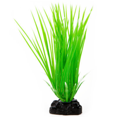 Top Fin Hair Grass Aquarium Plant