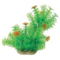 Pure Aquatic Natural Elements Cabomba - Slope - 10-12 in.