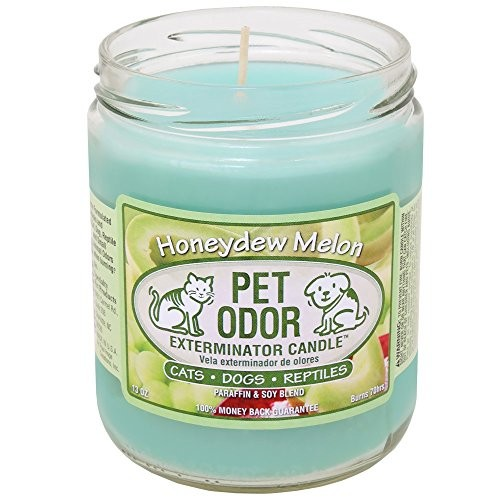 Specialty Pet Products Honeydew Melon Pet Odor Exterminator Candle