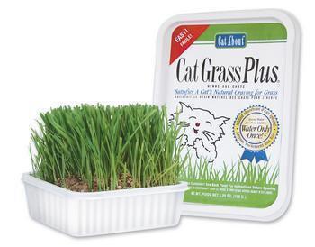 Cat Grass Plus