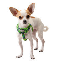 Top PawA Stud Muffin Adjustable Dog Collar