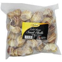 Roland Extra Large Snail Shells, 3 DOZEN Tube