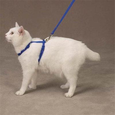 Petedge US2074 57 Savvy Tabby Nylon Cat Harness Nautical Blue