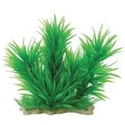 Pure Aquatic Pure Pets Aquatic Plant Blyxa Combo 12-14 Inch Green