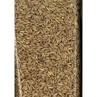 Sunseed Sun Seed Company BSS32010 Oat Groats Parakeet Food, 50-Pound
