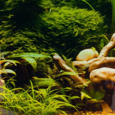 Top FinA Tropical & Riverbed Aquarium Background