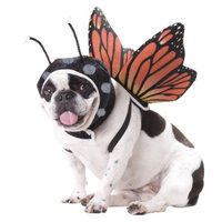 Buyseasons Butterfly Pet Costume - Small