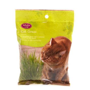 Whisker CityA Cat Grass