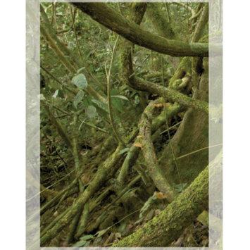 National GeographicTM 3-D Rainforest Vertical Aquarium Background