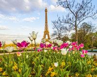 Etoy 1 000 Piece 'Eiffel Tulips' Puzzle