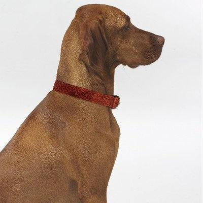 Bowsers Pet Products 7958 Small Dog Collar Cherry Bones