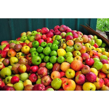 Apple Fruit Basket from Organic Mountain (Two Dozen (24))