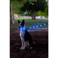 Light Up LED Dog Leash - Patented Light Up Durable Glowing Leash for Puppies and Dogs - by Dog e Glow (Blue Bones, 6 Feet)