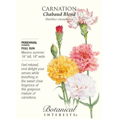 Chabaud Carnation Seeds - 350 mg - Perennial