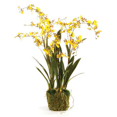 The Holiday Aisle Dancing Drop-In Orchid