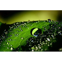 Novica Drops of Water on Leaf by Rudy Adnyana Photographic Print