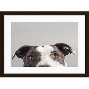 Latitude Run Ruby (Dog) Framed Photographic Print