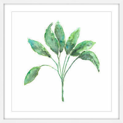 Marmont Hill Inc Marmont Hill - 'Sage Herb' by Thimble Sparrow Framed Painting Print