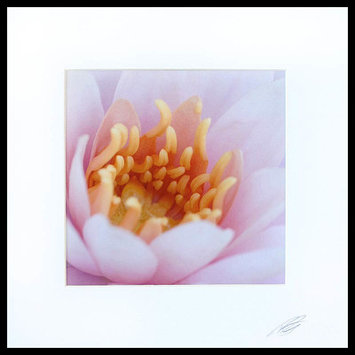 Novica Floral Shades of Pink by Ryan Chappell Photographic Print