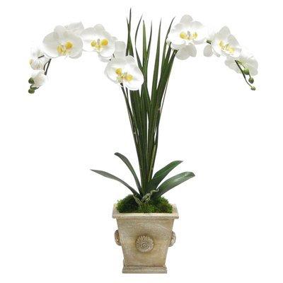 Canora Grey Artificial Double Phalaenopsis Orchid Floral Arrangement Base Color: Neutral