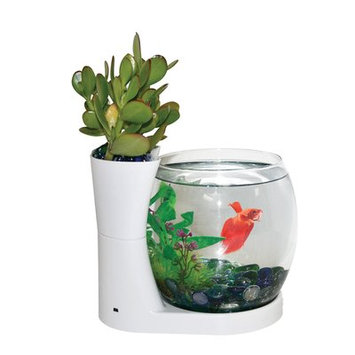 Eliv 0.75 Gallon Betta Planter Aquarium Bowl Color: White