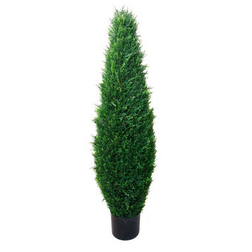 Darby Home Co Cypress Tree in Pot