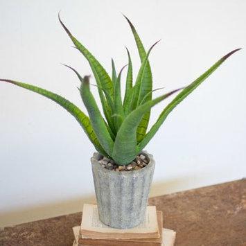 Birch Lane Faux Aloe in Cement Pot