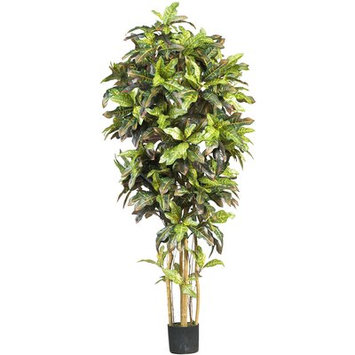 World Menagerie Croton Tree in Pot Size: 72