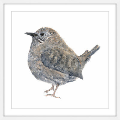 Marmont Hill Inc Marmont Hill - 'Wren Bird' by Thimble Sparrow Framed Painting Print