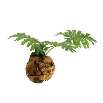 Bay Isle Home Selloum Philo Leaves Plant