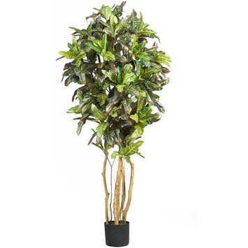 World Menagerie Croton Tree in Pot Size: 60