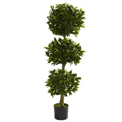 Darby Home Co Triple Bay Leaf Round Topiary in Pot