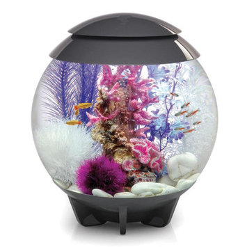 Biorb Halo Aquarium Bowl Color: Gray, Size: 18
