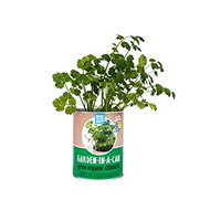 Back to the Roots Garden in A Can, Organic Cilantro