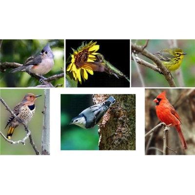 Hi-Look Inc. Steve Gifford Eastern Songbirds assorted