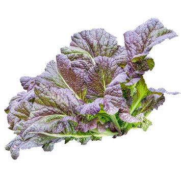 Mountain Valley Seeds Company Mustard Garden Seeds - Red Garnet - 1 Lb - Non-GMO Vegetable & Herb Gardening Seed