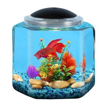 API Betta Hex Bowl Aquarium Kit - 2 gal