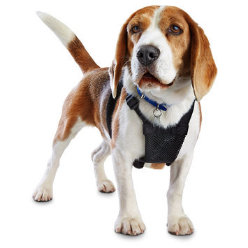 Good2Go Black No Pull Dog Harness, Medium